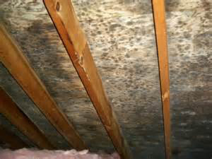 Attic Mold Joliet